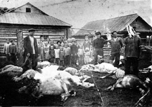 Коровы, отравленные противниками колхозов. Село Гаревка Тогучанского района