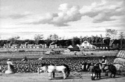Хлопковая плантация на Юге. У.Уолкер. 1876г. Тургенев об этом и не мечтал...